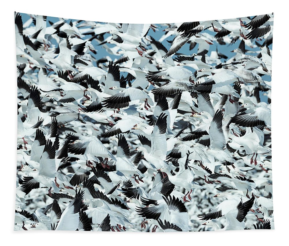 Snow Tapestry featuring the photograph Controlled Chaos by Everet Regal