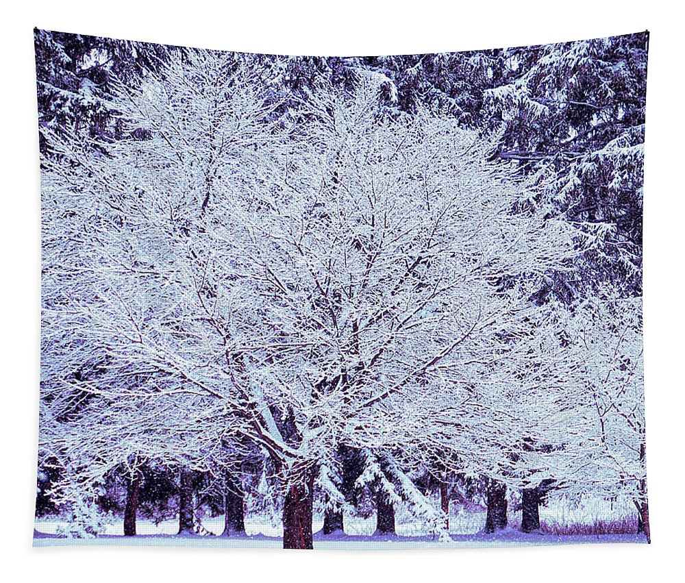Winter Tapestry featuring the photograph Cool Sunset Essence Of Winter by Aimee L Maher ALM GALLERY