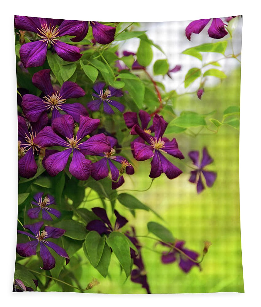 Clematis Tapestry featuring the photograph Copious Clematis by Jessica Jenney