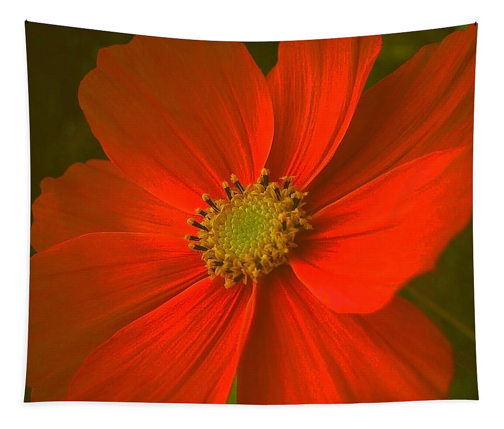 Flower Tapestry featuring the photograph Cosmos by Juergen Weiss