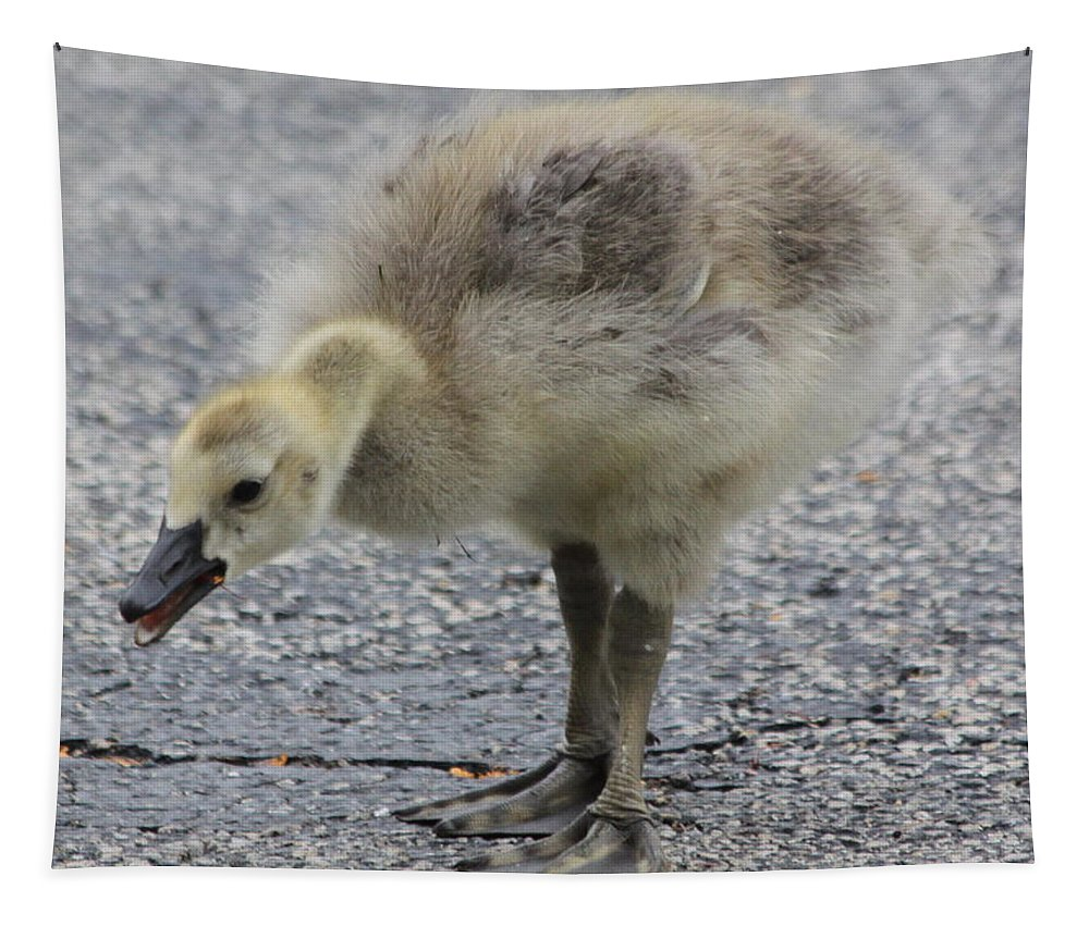 Goose Tapestry featuring the photograph Cough Cough by Lauri Novak