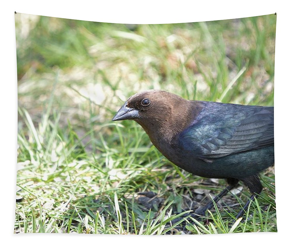 Animal Tapestry featuring the photograph Cowbird by Bonfire Photography