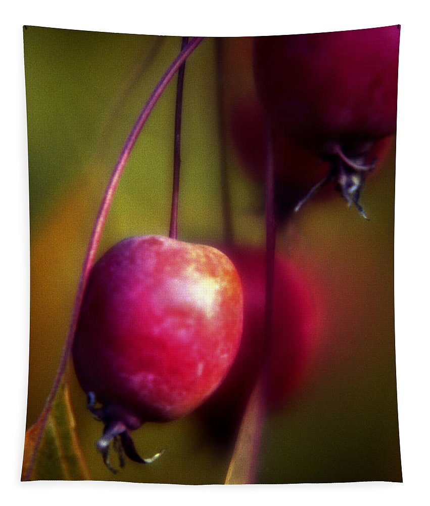 Macro Tapestry featuring the photograph Crabapple by Lee Santa