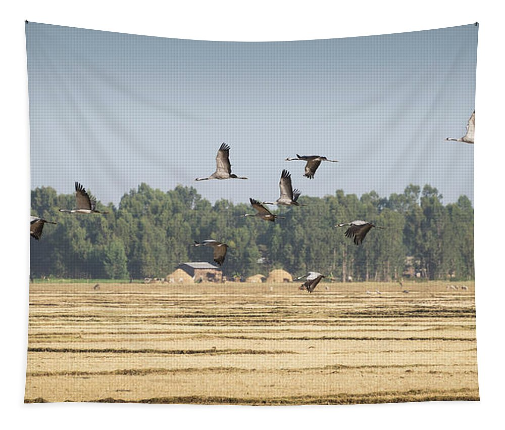 Crane Tapestry featuring the photograph Cranes Over Ethiopia by Alex Lapidus