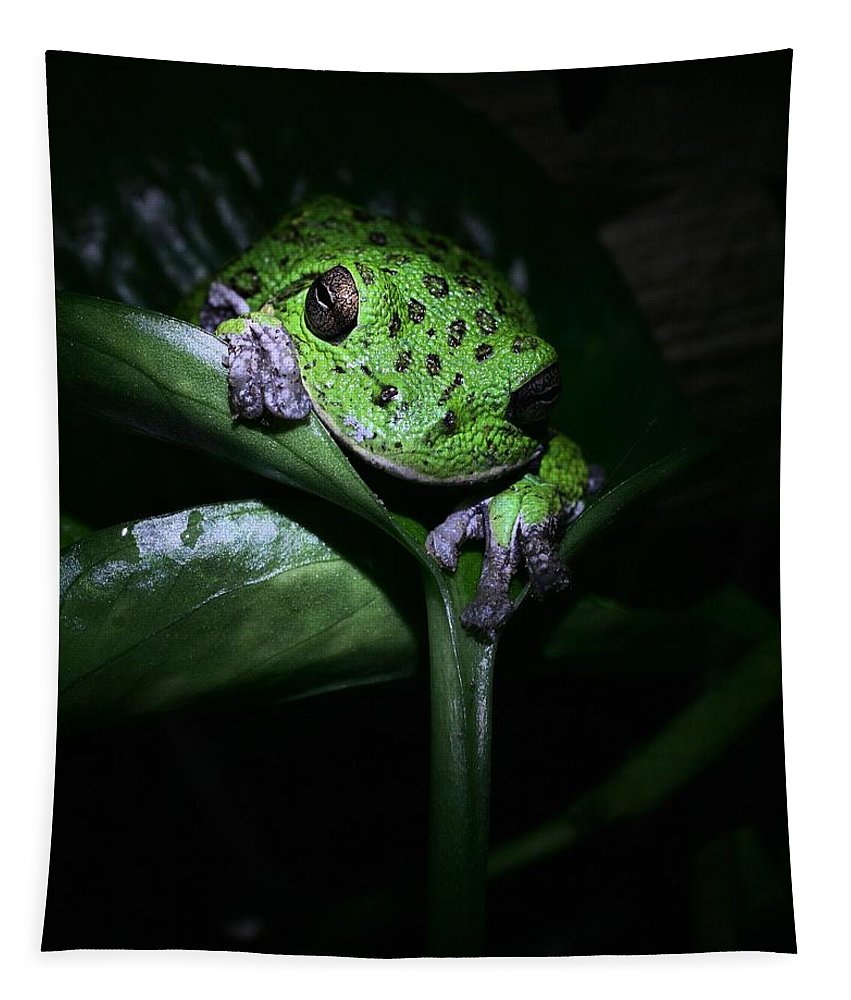 Barking Treefrog Tapestry featuring the photograph Creature Of The Night by JC Findley