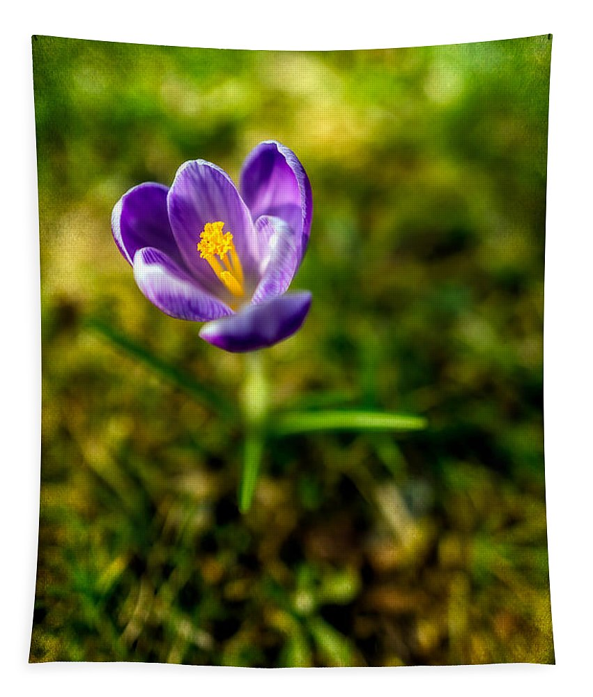 Crocus Tapestry featuring the photograph Crocus by Adrian Evans