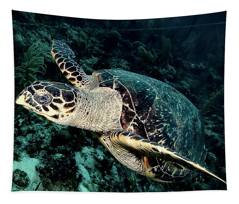 Belize Tapestry featuring the photograph Cruising Hawksbill by Jean Noren