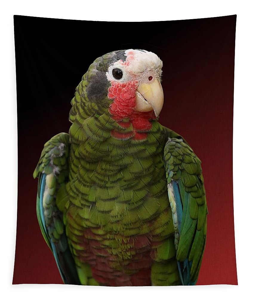 Cuban Amazon Parrot Tapestry featuring the photograph Cuban Amazon Parrot by Debi Dalio