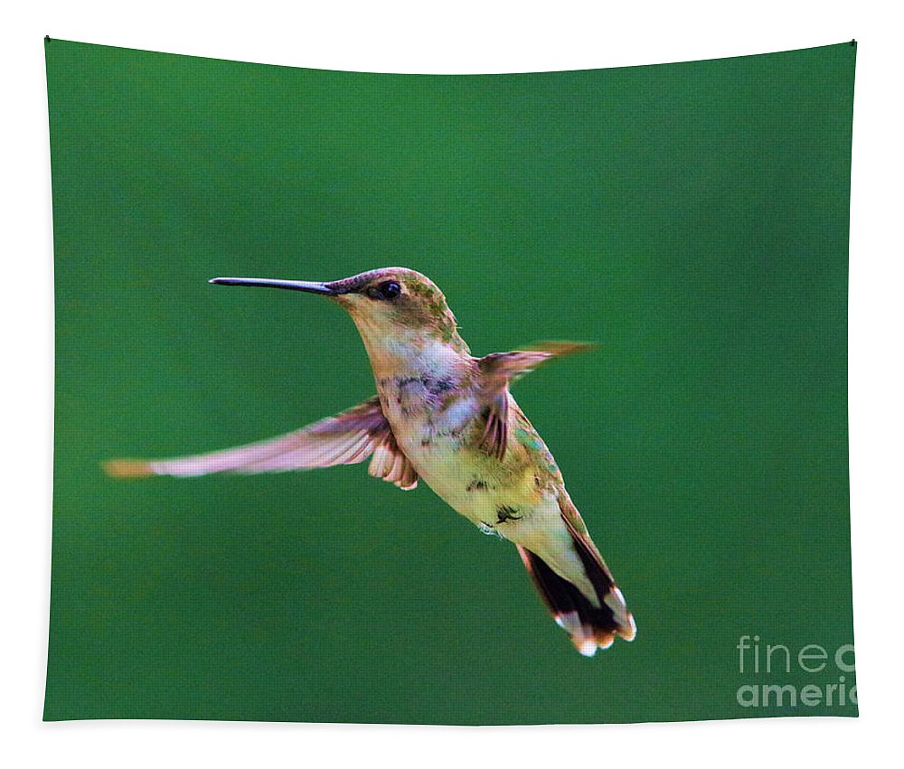 Bird Flight Tapestry featuring the photograph Curious Hummer by Jeff Swan
