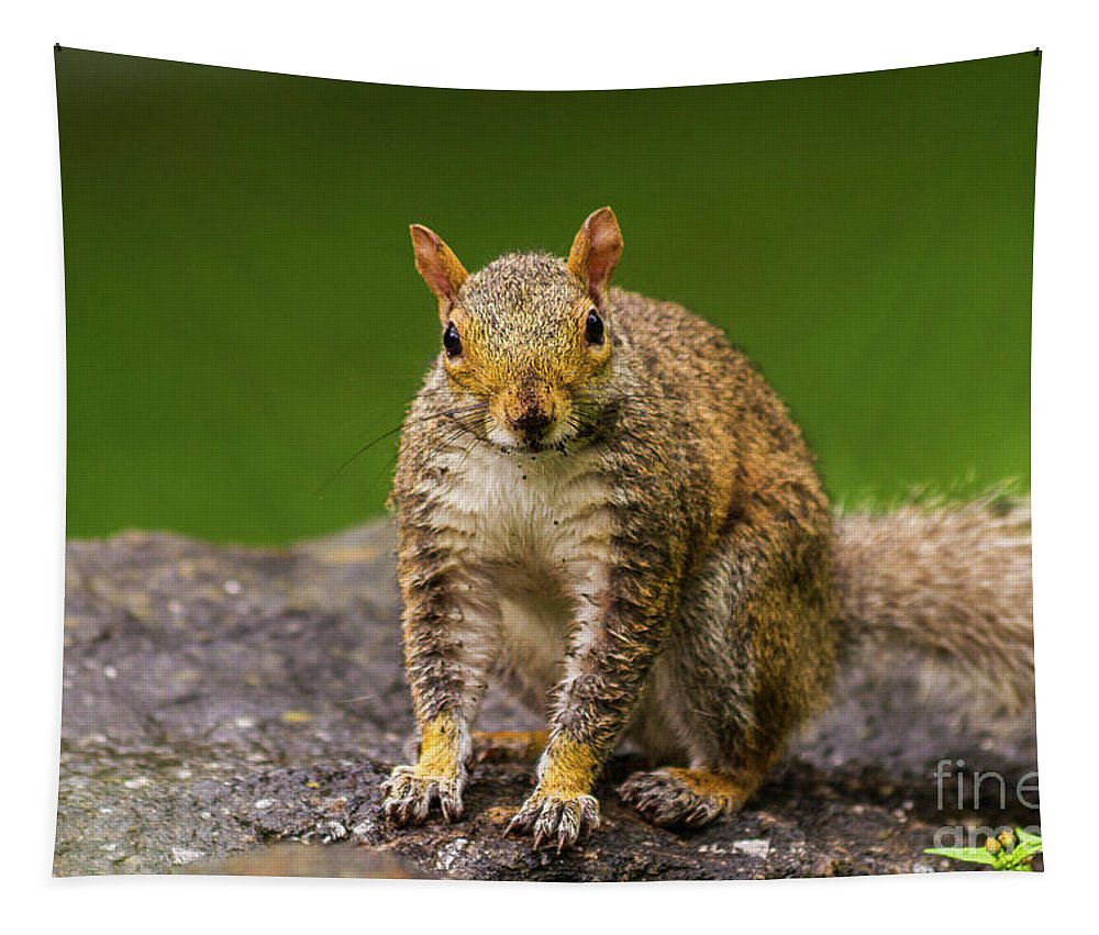 Nature Tapestry featuring the photograph Curious Squirrel by Mirko Chianucci