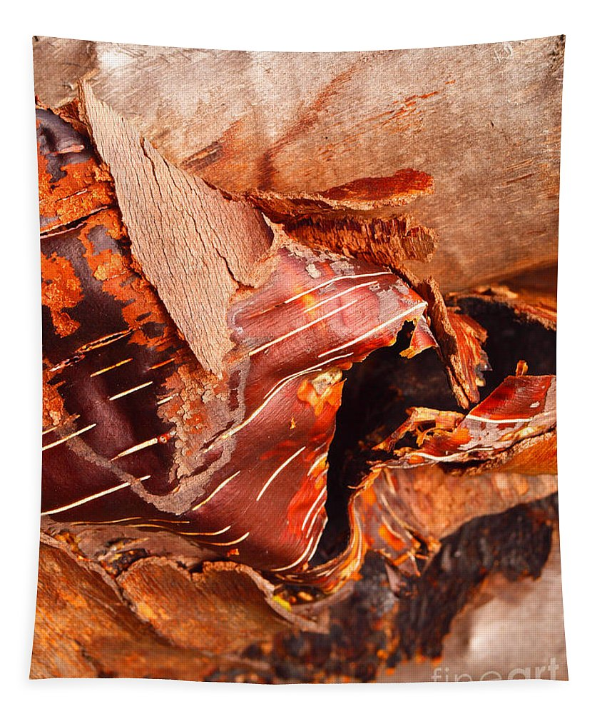 Nature Tapestry featuring the photograph Curled Bark by Tara Turner