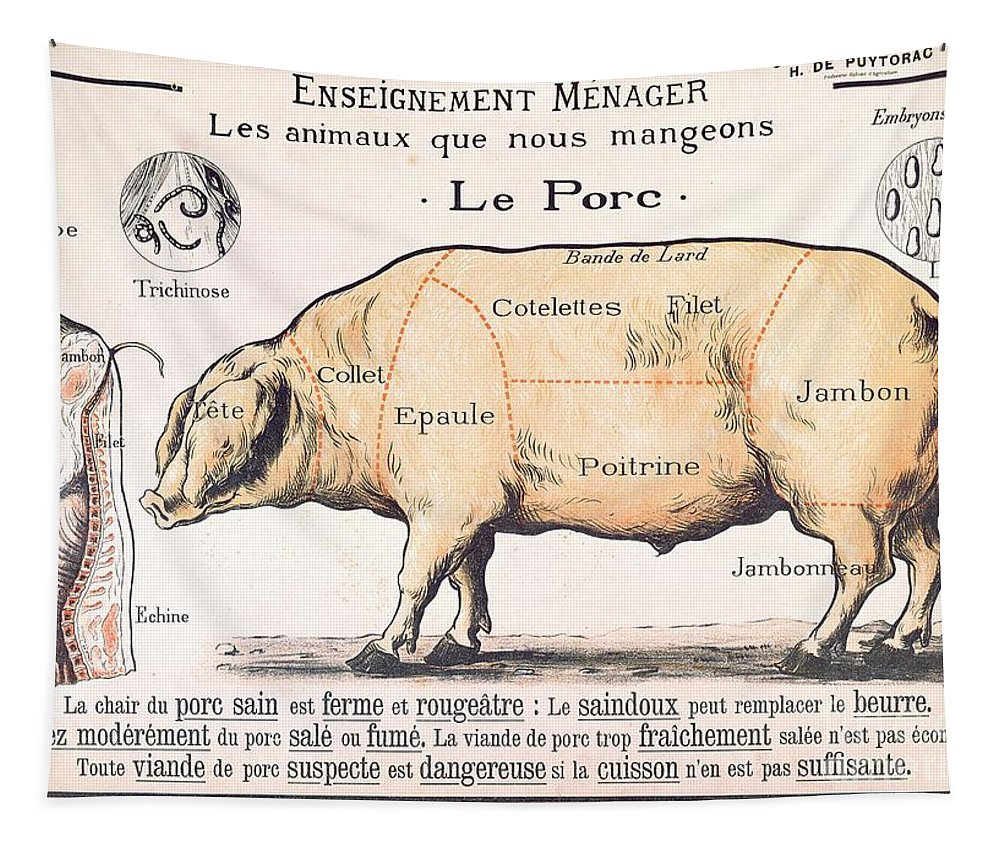 Eating;farm Animals; Cross Section; Loin; Rump; Flank; Butcher; Joint; Pig; Pigs; Shoulder; Ham; Belly; Shoulder; Diagram; Slaughter; Farming; Food Preparation; Domestic Science; Nutrition;teaching;education;home Economics; Farming; Breed;butchering Tapestry featuring the drawing Cuts Of Pork by French School