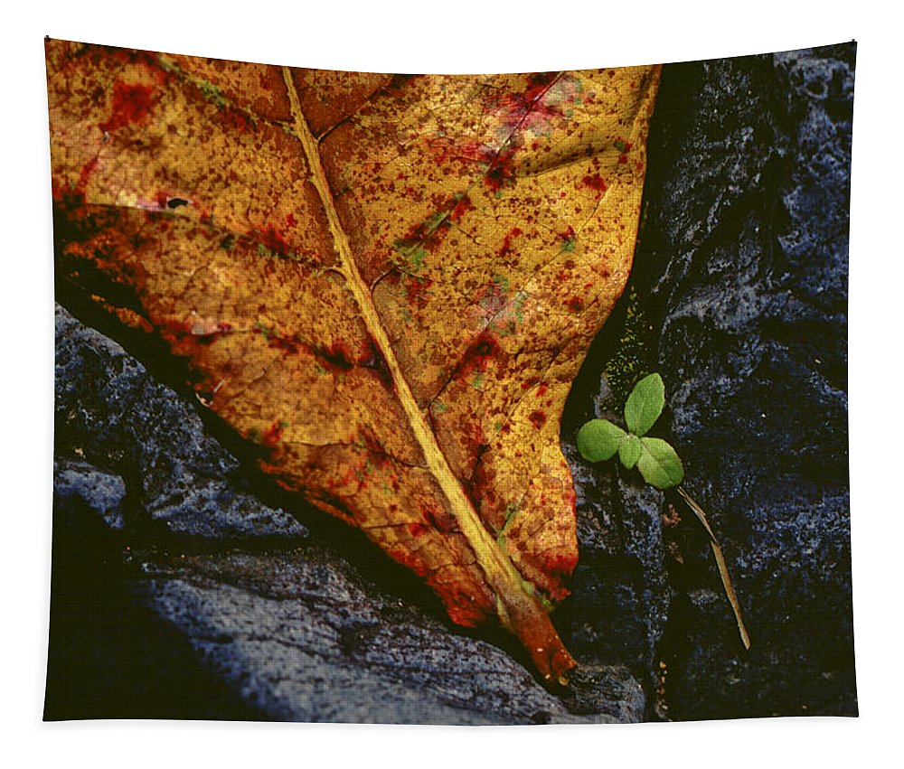 Photography Tapestry featuring the photograph Cycle Of Life by Paul Wear