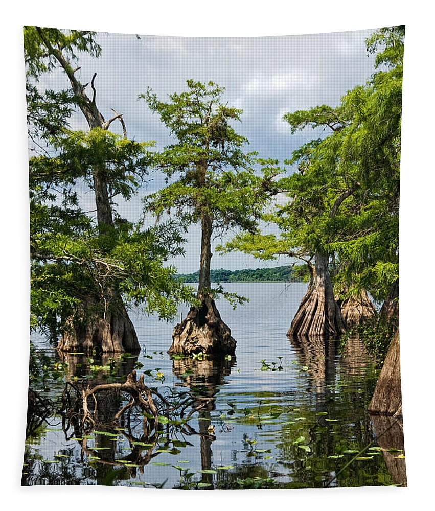 Trees Tapestry featuring the photograph Cypress Reflections by Christopher Holmes