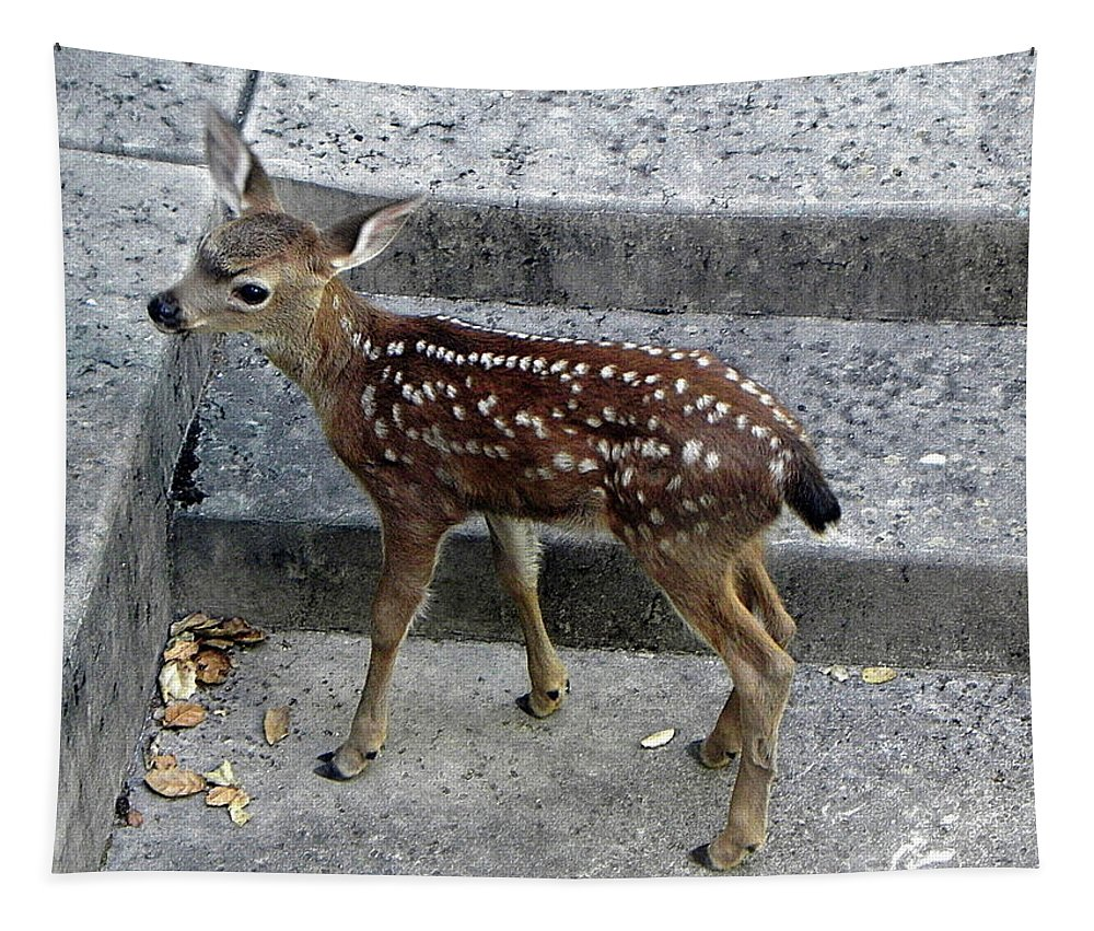 Deer Tapestry featuring the photograph D-a0069 Mule Deer Fawn On Our Property On Sonoma Mountain by Ed Cooper Photography