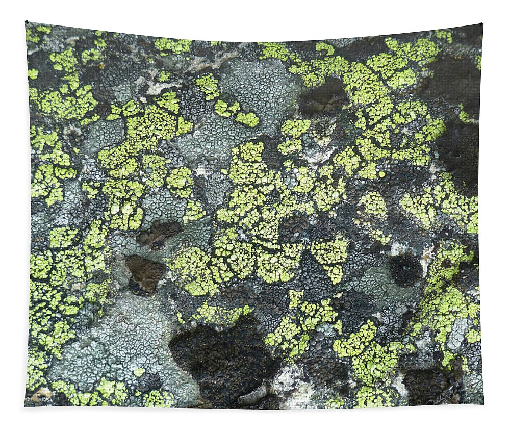 Lichen Tapestry featuring the photograph D07343-dc Lichen On Rock by Ed Cooper Photography