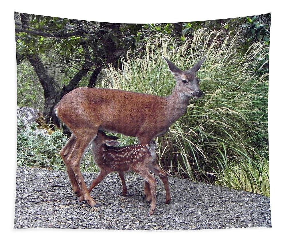Fawn Tapestry featuring the photograph D2b6314 Fawn And Deer Mom by Ed Cooper Photography