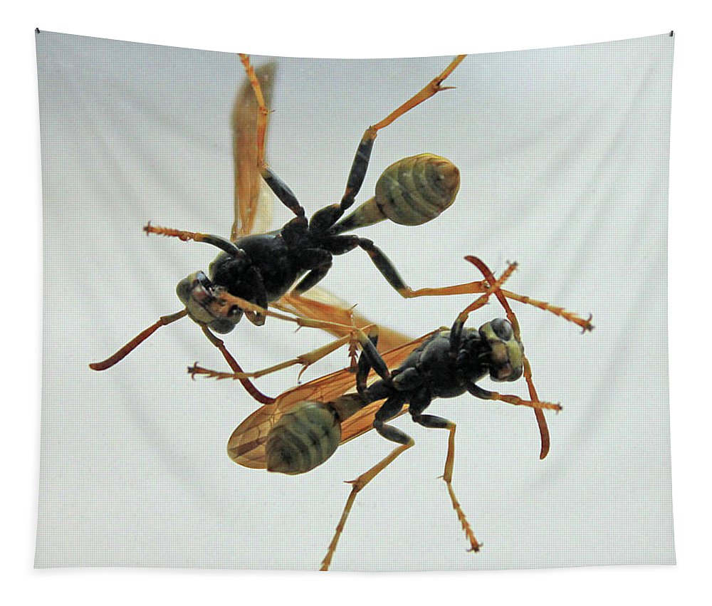 Insect Tapestry featuring the photograph D2b6337 Wasps On Sonoma Mountain by Ed Cooper Photography