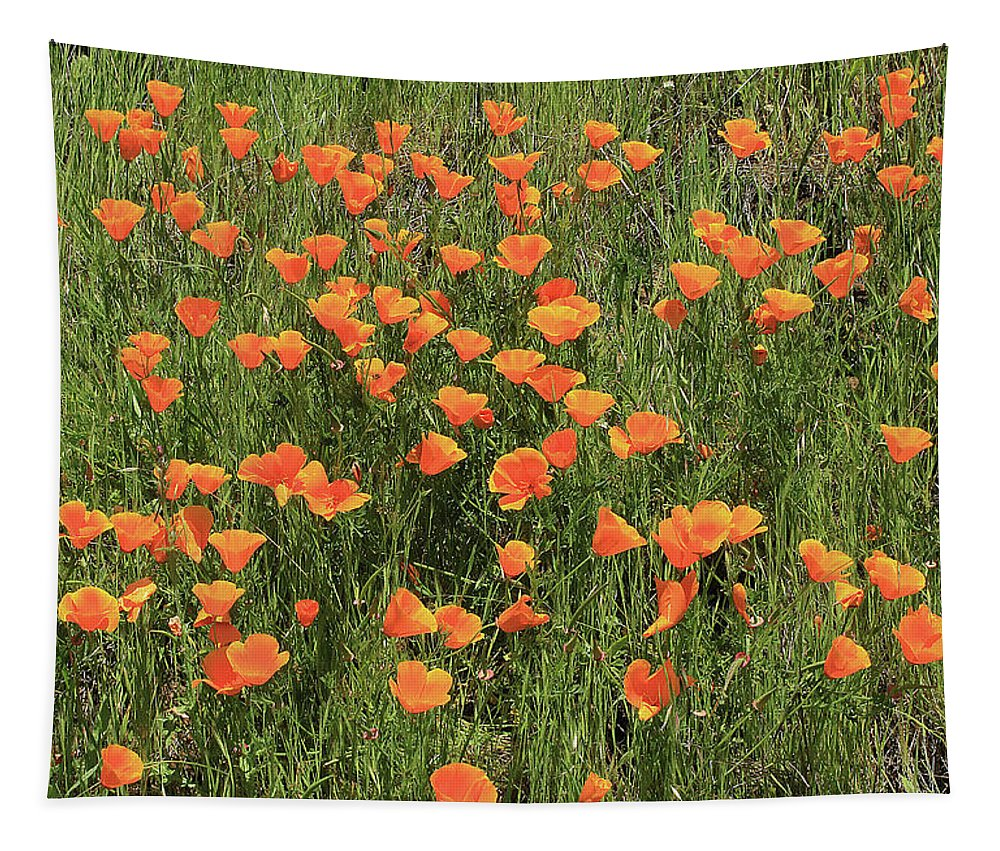 D7b6307 Tapestry featuring the photograph d7b6307 California Poppies by Ed Cooper Photography