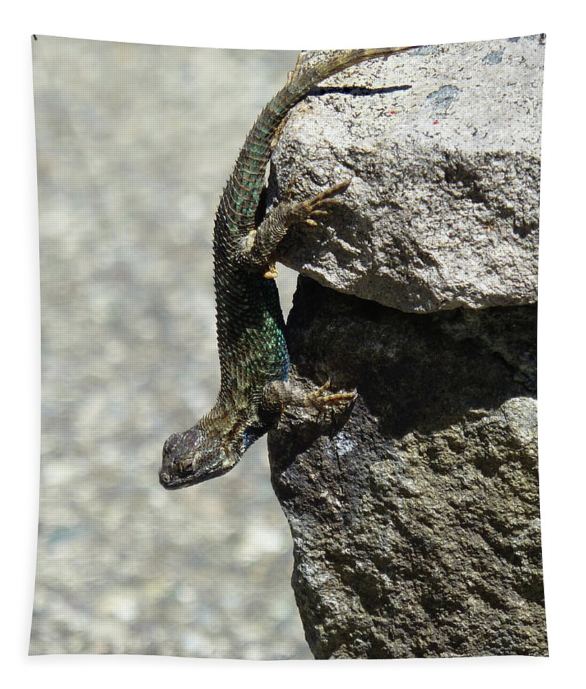 D7b6335 Tapestry featuring the photograph D7b6335 Western Fence Lizard, Male, Sonoma Mountain, Ca by Ed Cooper Photography