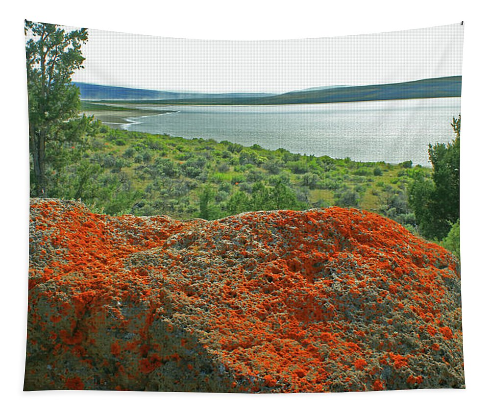 Lichen Tapestry featuring the photograph Da5869 Lichen Covered Rock by Ed Cooper Photography