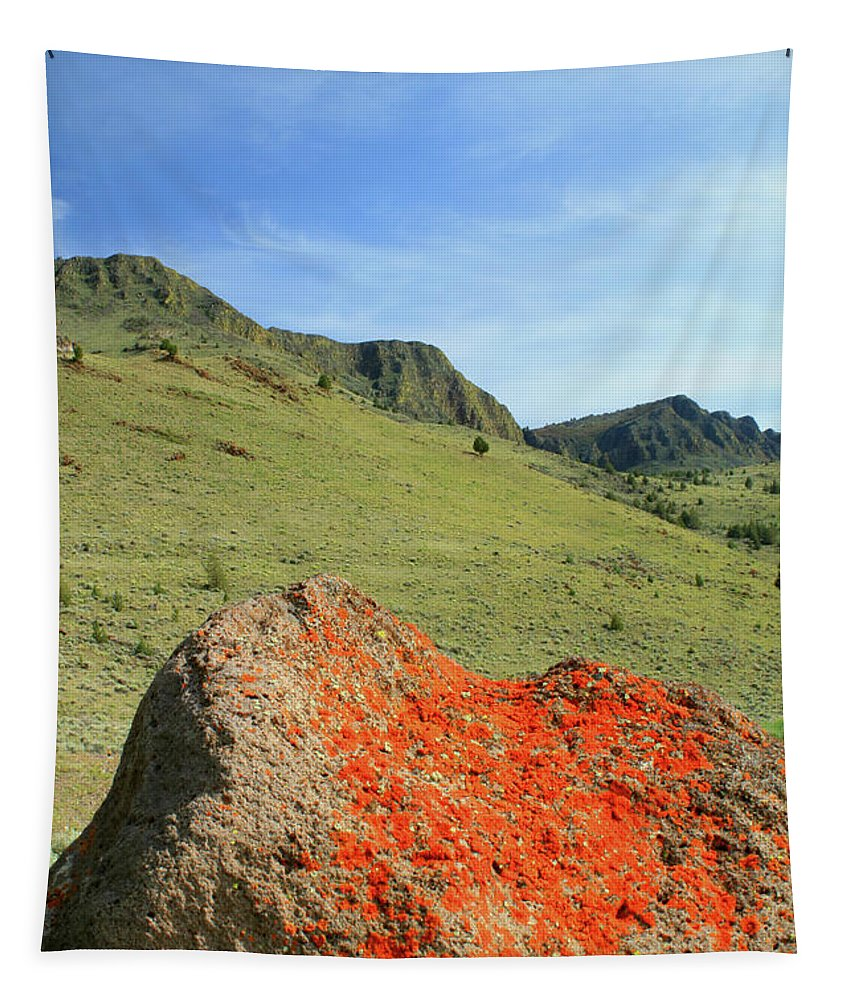 Lichen Tapestry featuring the photograph Da5872 Lichen Covered Rock Below Abert Rim by Ed Cooper Photography