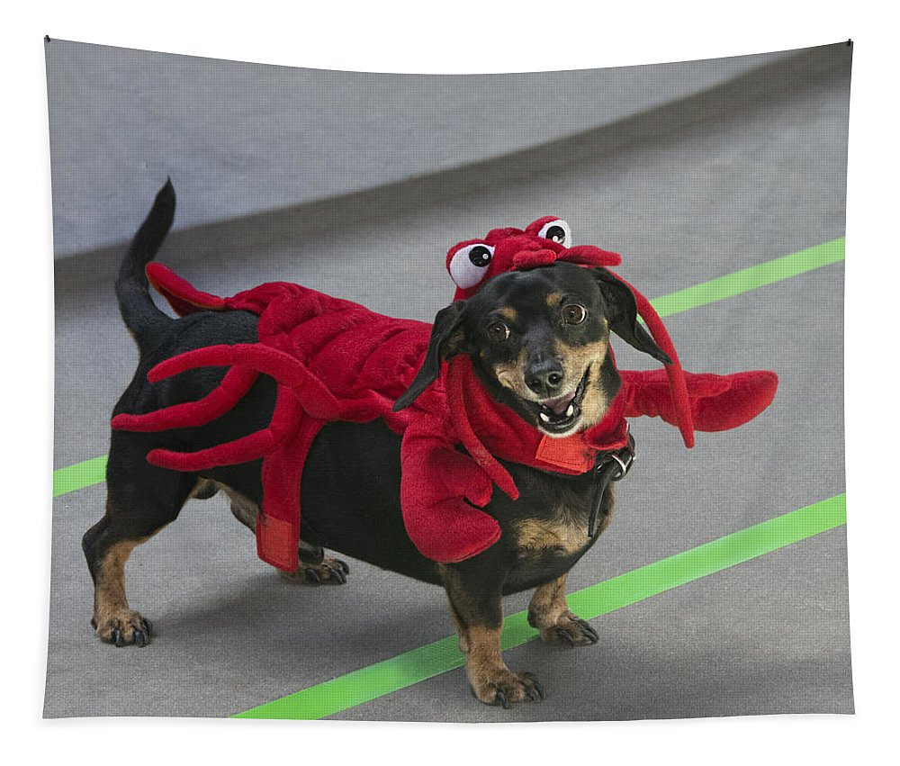 Dog Tapestry featuring the photograph Dachshund Lobster by Mitch Spence