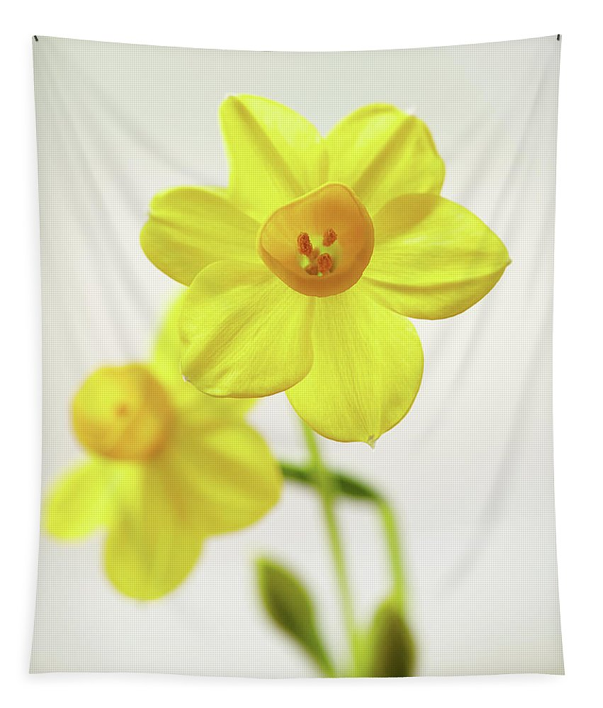 Garden Tapestry featuring the photograph Daffodil Strong by Garden Gate magazine