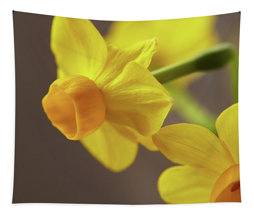 Garden Tapestry featuring the photograph Daffodil Sunrise by Garden Gate magazine