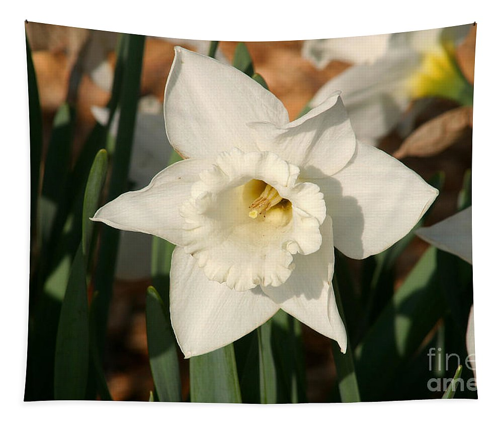 Dafodil Tapestry featuring the photograph Dafodil211 by Gary Gingrich Galleries