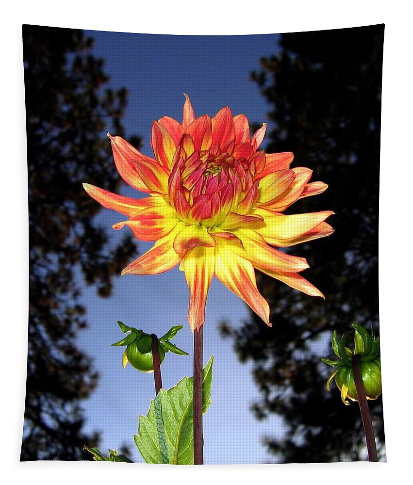 Dahlia Tapestry featuring the photograph Dahlia Delight by Will Borden