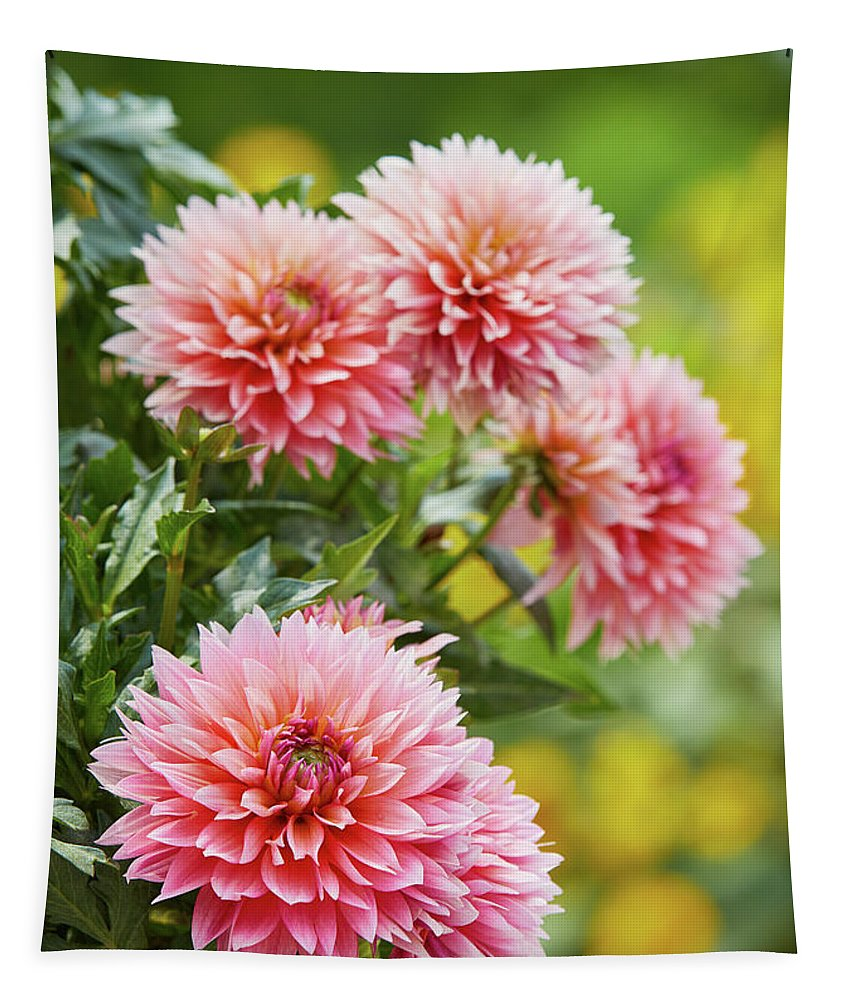 Garden Gate Tapestry featuring the photograph Dahlia Passion Fruit by Garden Gate magazine