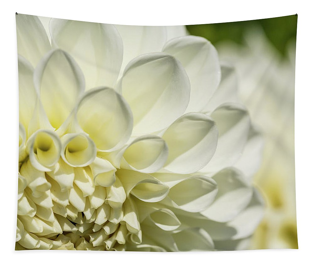 Dahlia Tapestry featuring the photograph Dahlia Study 4 by Scott Campbell