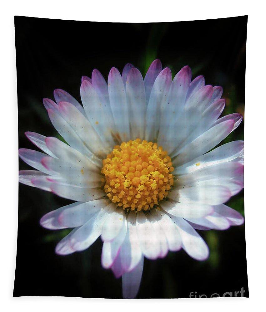 Daisy Tapestry featuring the photograph Daisy Under Sun by Nina Ficur Feenan