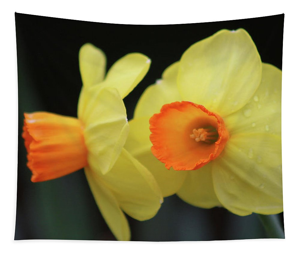 Daffodil Tapestry featuring the photograph Dallas Daffodils 07 by Pamela Critchlow