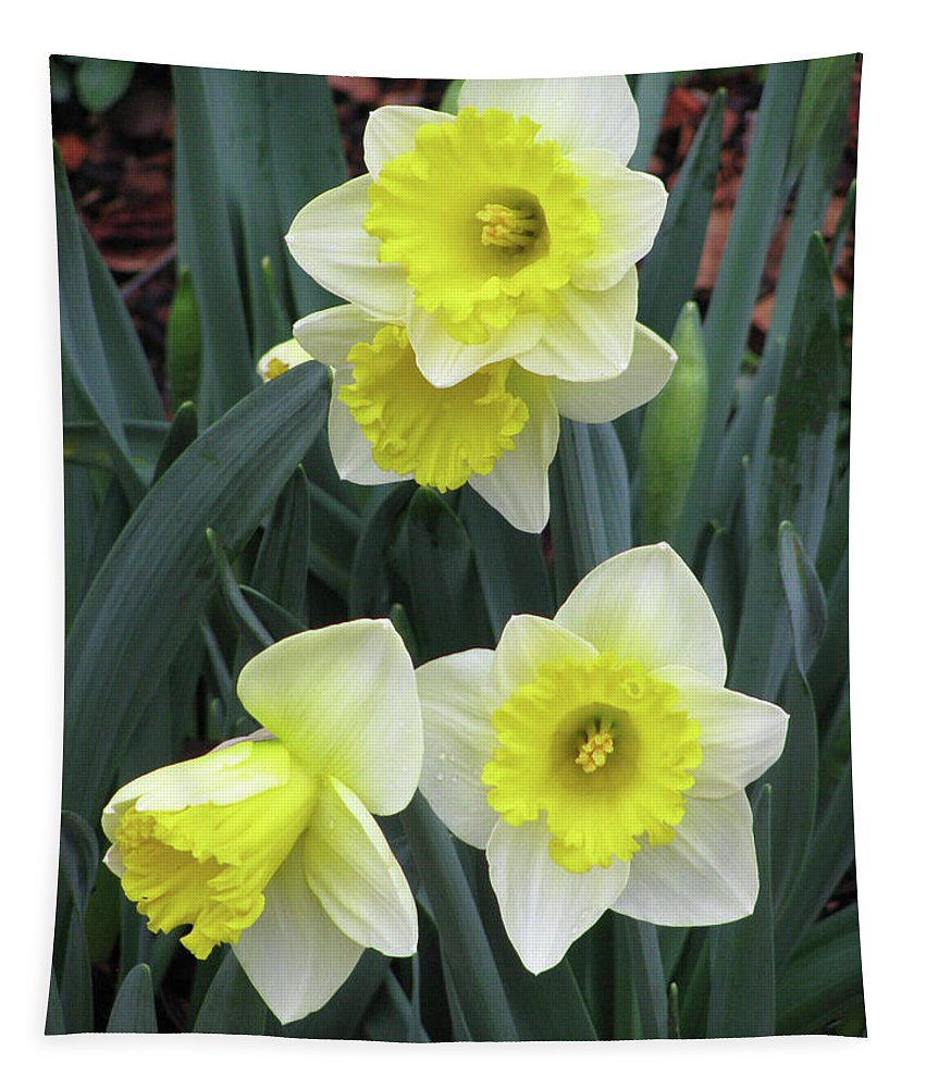 Daffodil Tapestry featuring the photograph Dallas Daffodils 08 by Pamela Critchlow