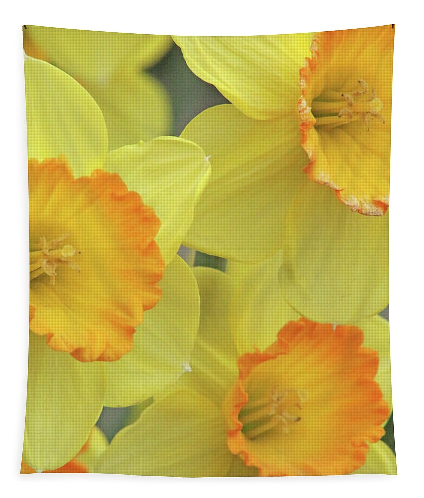 Daffodil Tapestry featuring the photograph Dallas Daffodils 24 by Pamela Critchlow