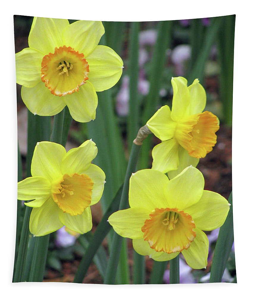 Daffodil Tapestry featuring the photograph Dallas Daffodils 26 by Pamela Critchlow