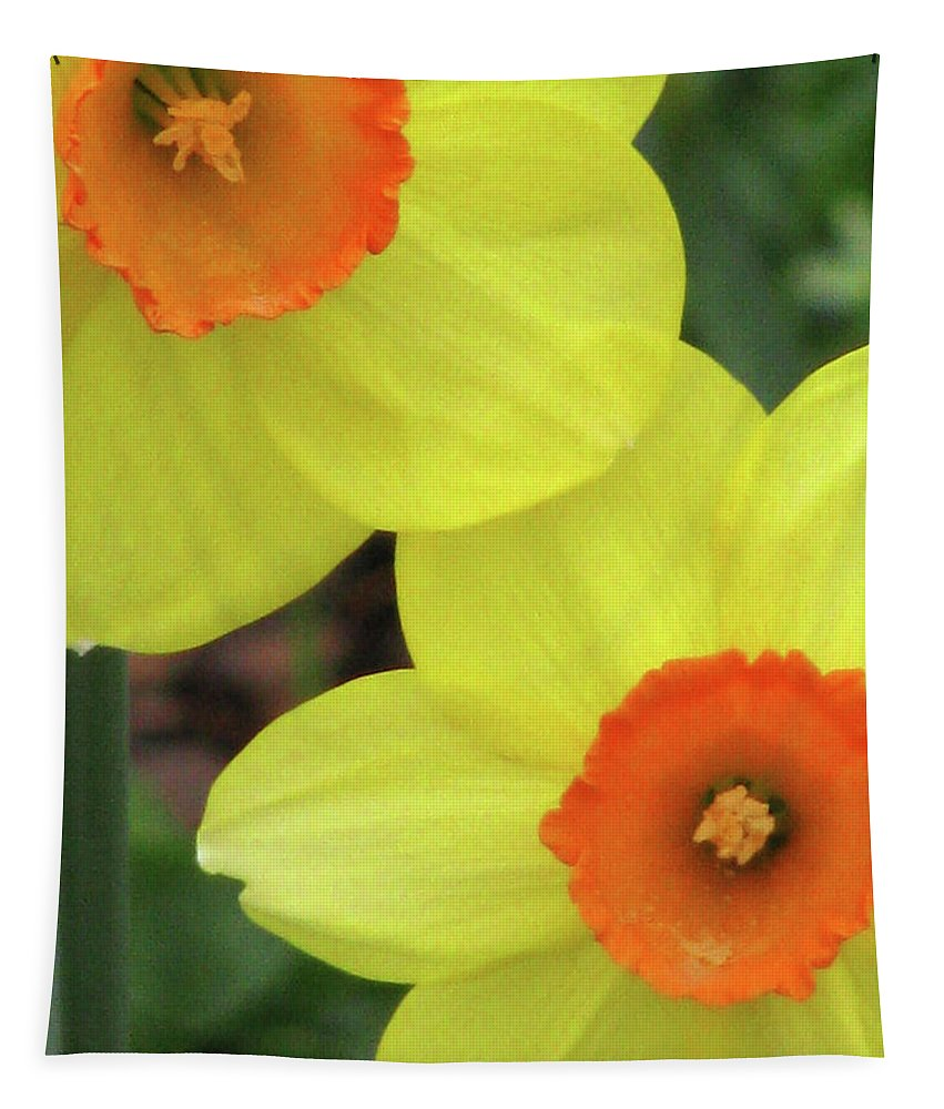 Daffodil Tapestry featuring the photograph Dallas Daffodils 36 by Pamela Critchlow