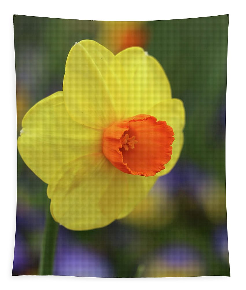 Daffodil Tapestry featuring the photograph Dallas Daffodils 46 by Pamela Critchlow