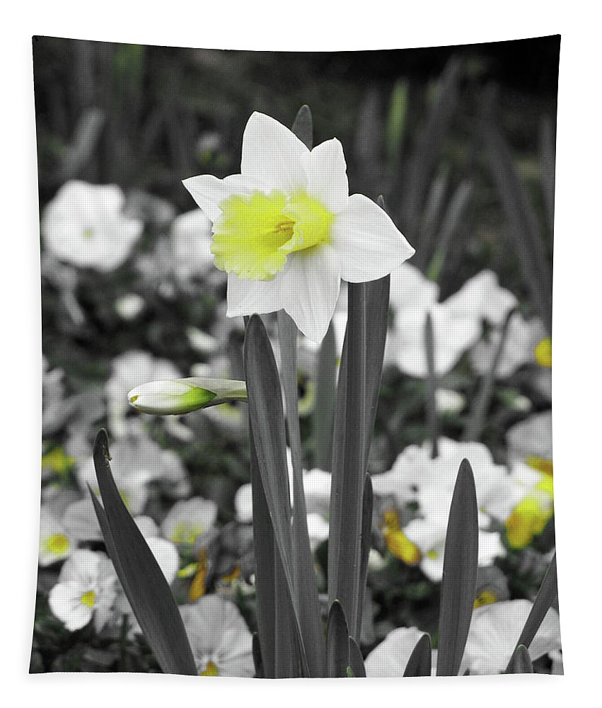 Daffodil Tapestry featuring the photograph Dallas Daffodils 54 by Pamela Critchlow