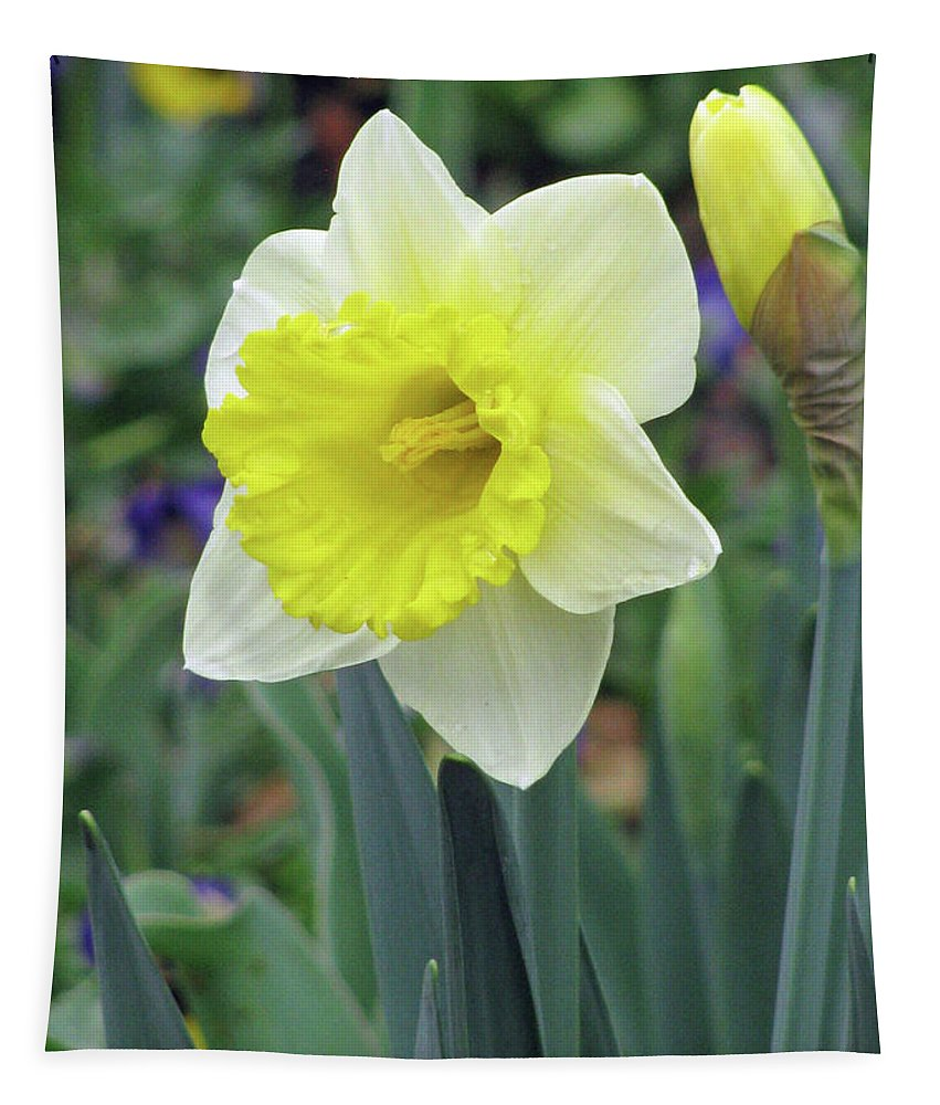 Daffodil Tapestry featuring the photograph Dallas Daffodils 64 by Pamela Critchlow