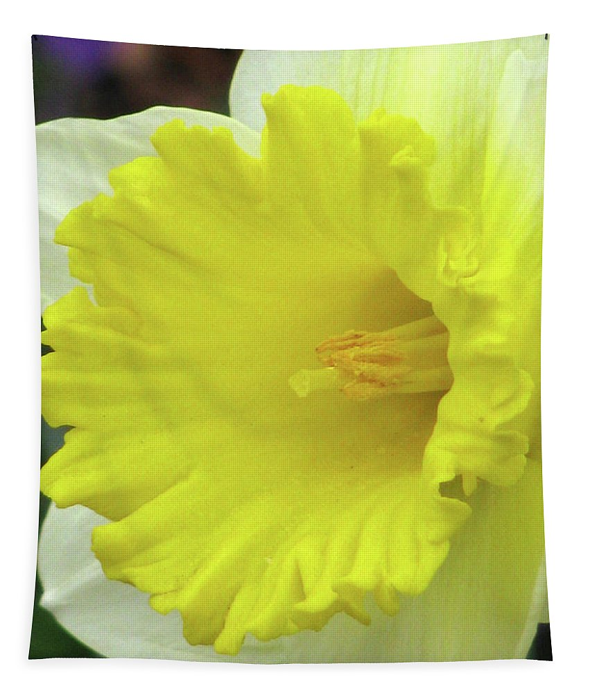 Daffodil Tapestry featuring the photograph Dallas Daffodils 72 by Pamela Critchlow