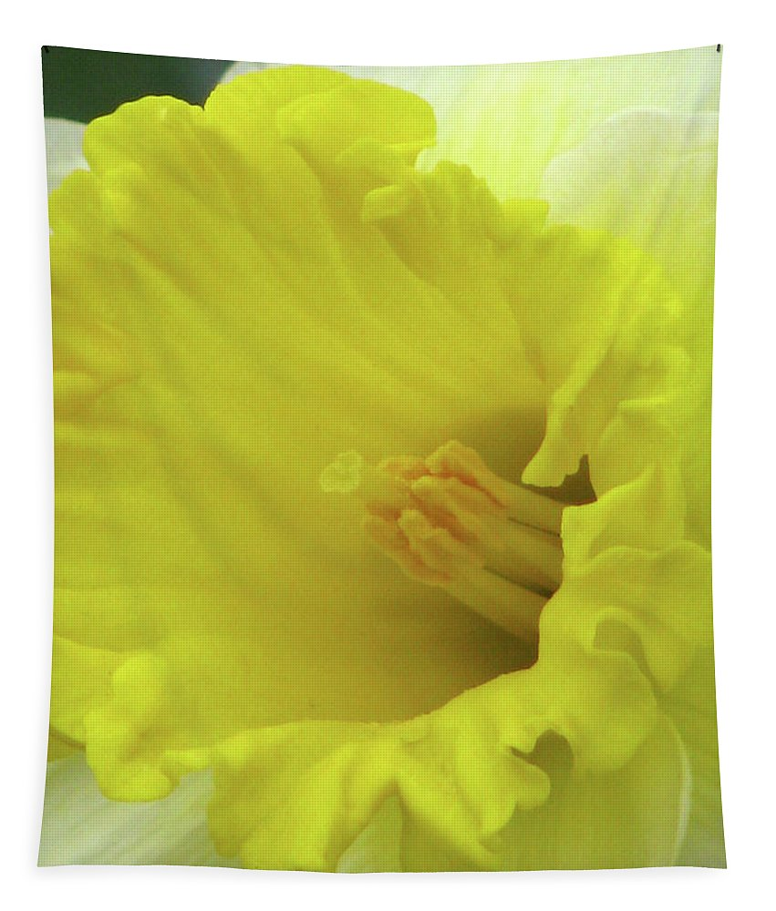 Daffodil Tapestry featuring the photograph Dallas Daffodils 73 by Pamela Critchlow