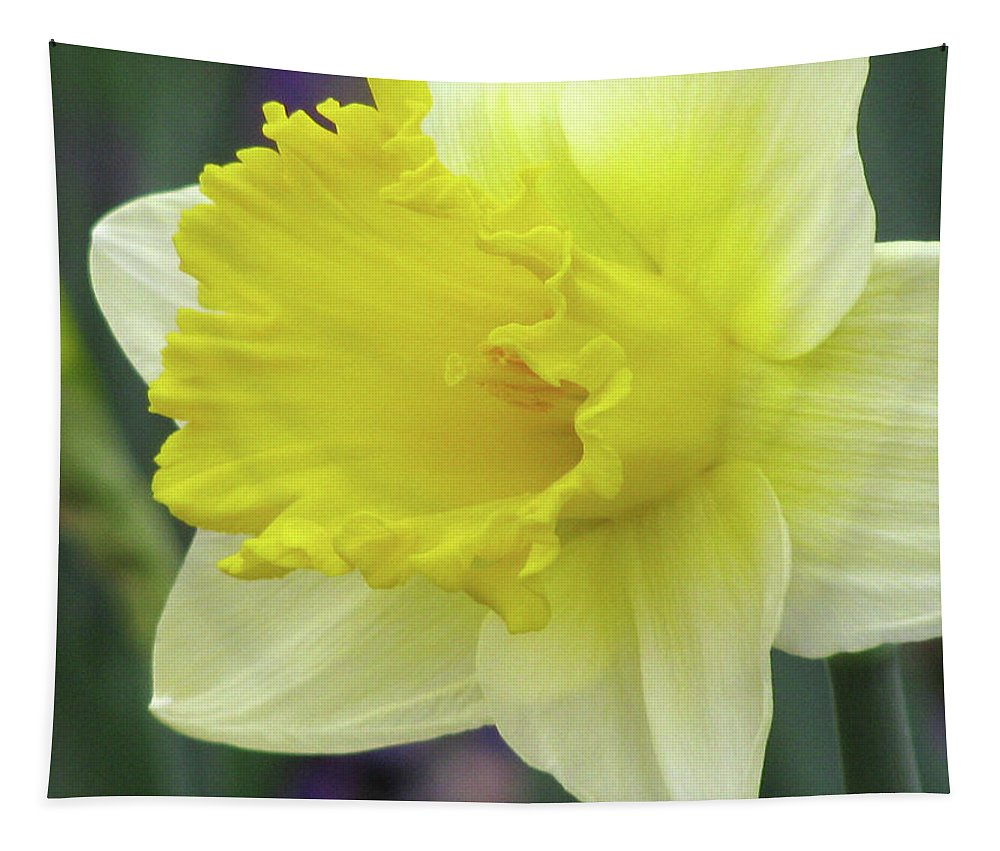 Daffodil Tapestry featuring the photograph Dallas Daffodils 80 by Pamela Critchlow