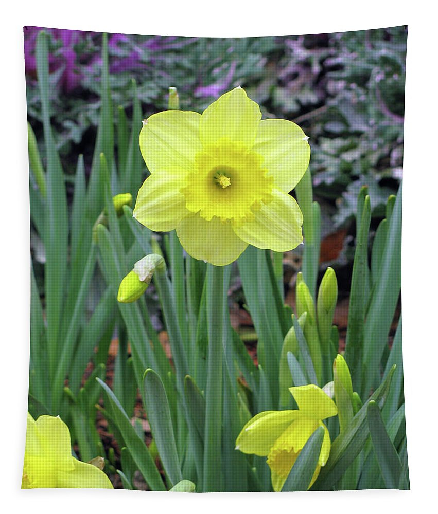 Daffodil Tapestry featuring the photograph Dallas Daffodils 83 by Pamela Critchlow