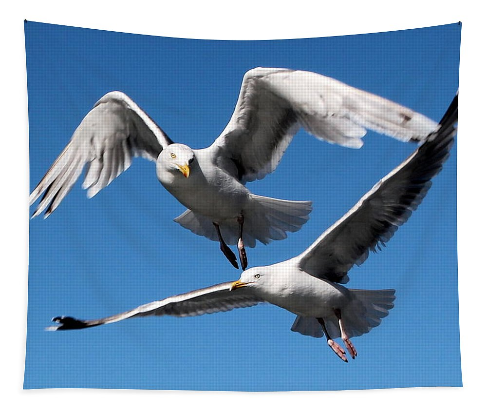 Fly Tapestry featuring the photograph Aerial Dance Of The Seagulls by Laurel Talabere