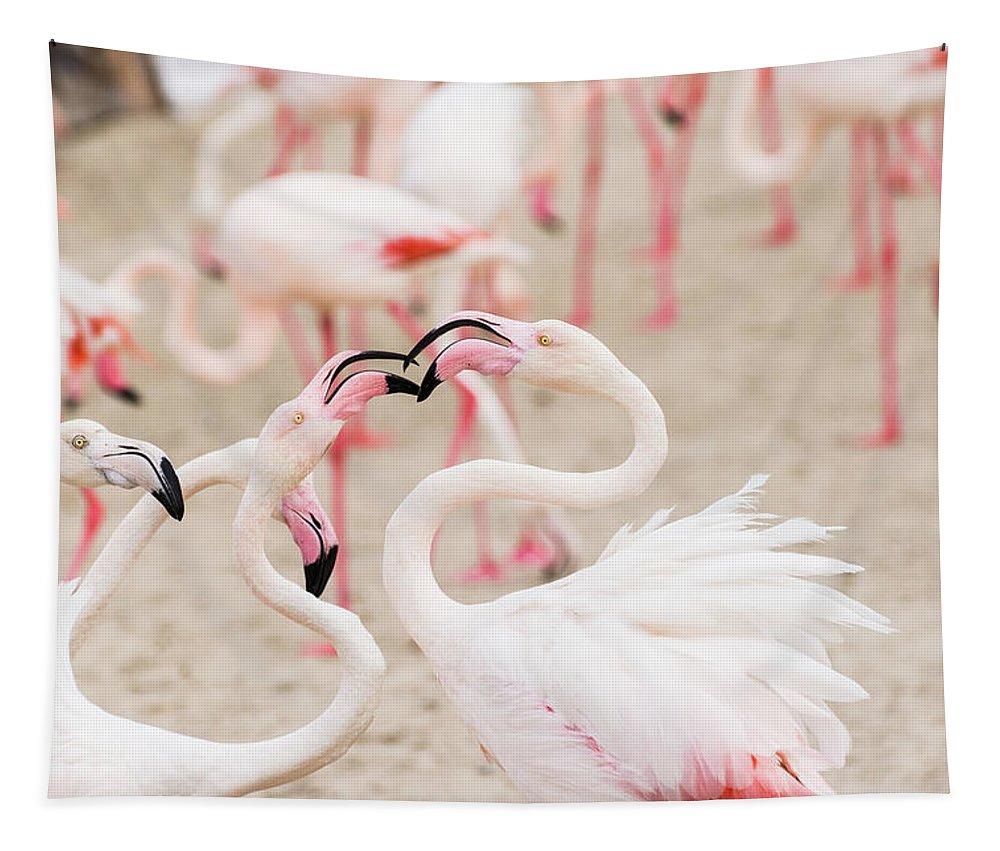 Flamingo Tapestry featuring the photograph Dancing Beak To Beak by Alex Lapidus