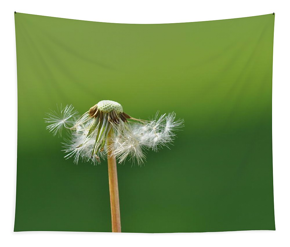 Dandelion Tapestry featuring the photograph Dandelion Delight by Barbara Treaster