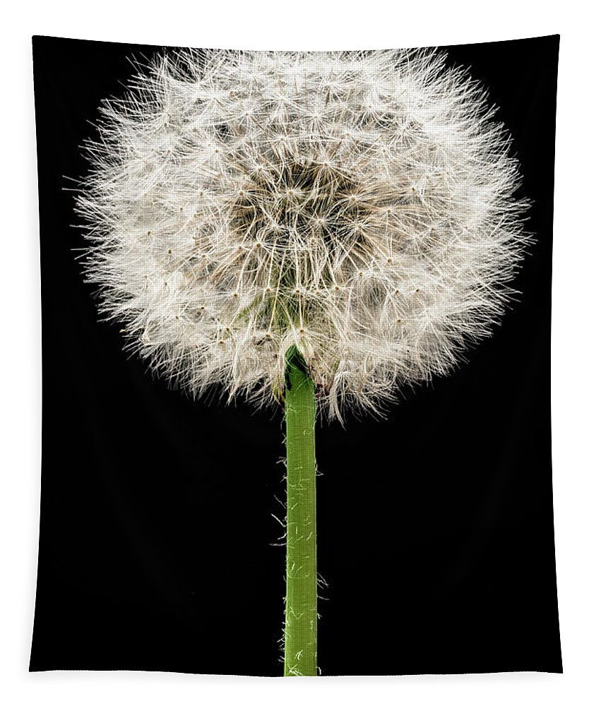 Dandelion Tapestry featuring the photograph Dandelion Gone To Seed by Steve Gadomski